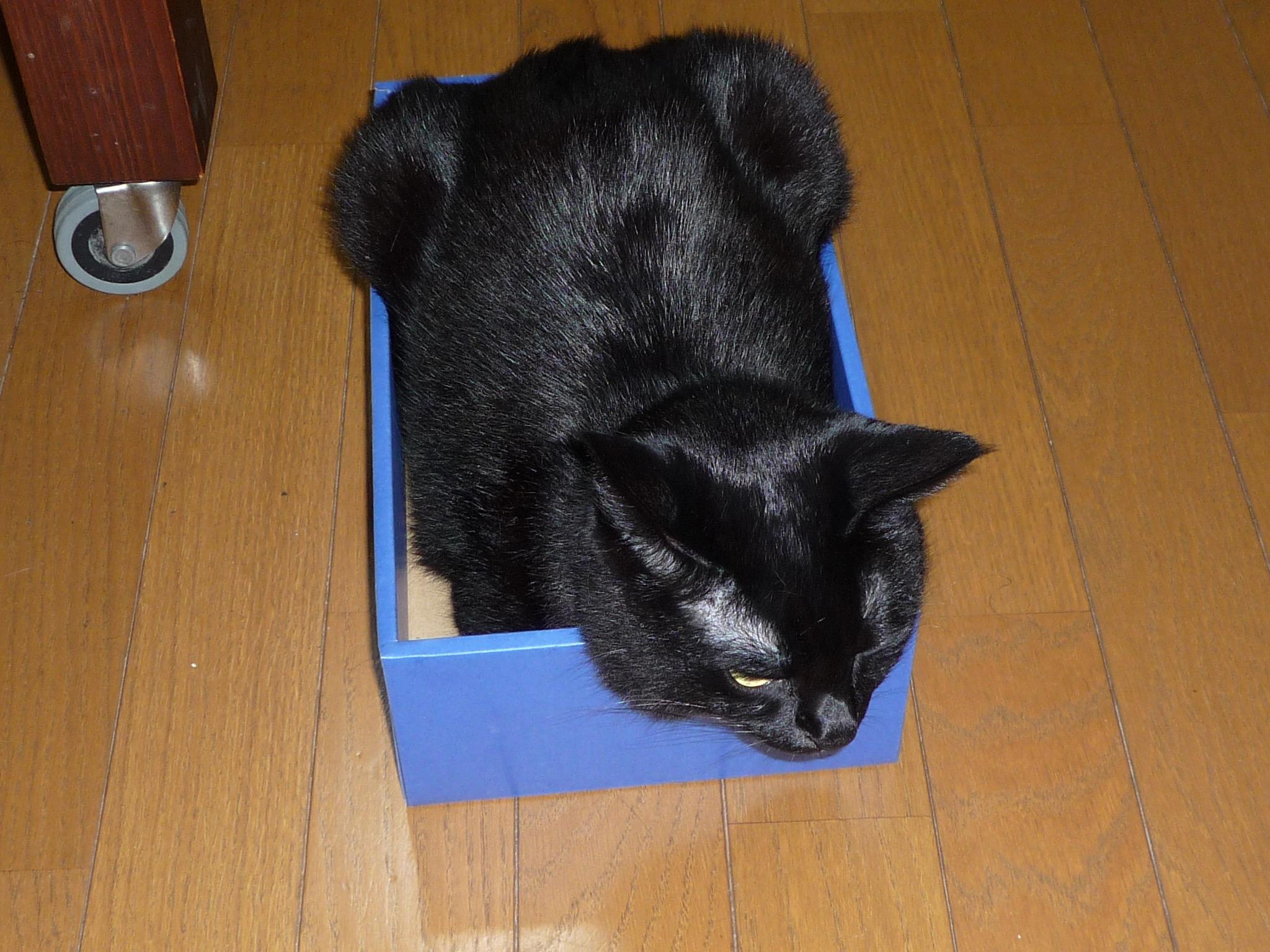 黒猫 箱入り娘4
