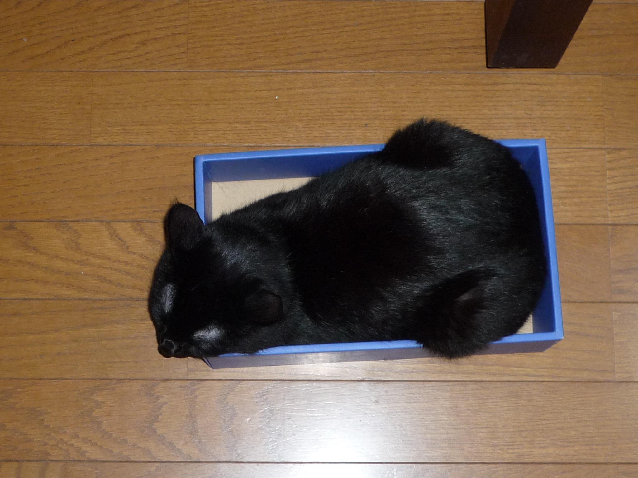 黒猫 箱入り娘5