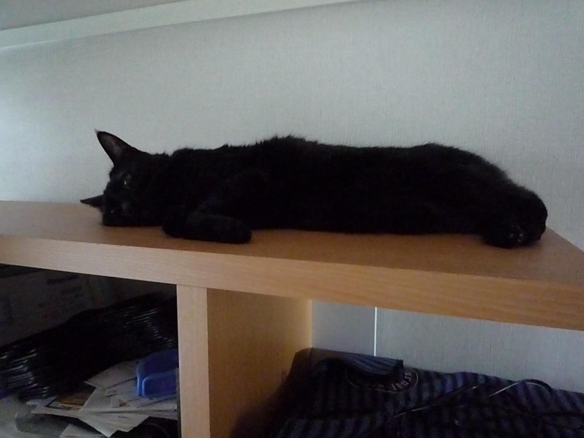 黒猫 だらける