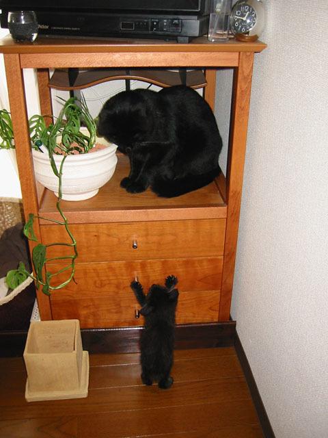 黒猫 届かない