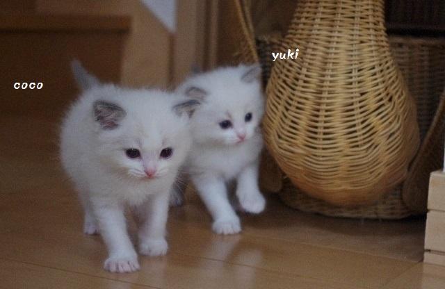 Ciエミー&ルージュIMGP0517