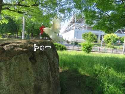 二太2016/05/13-1