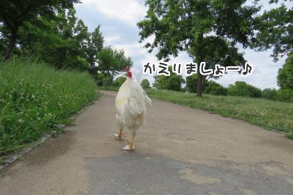 二太2016/06/09-4