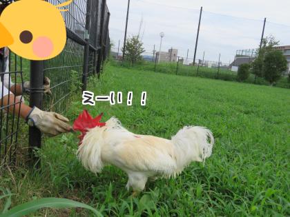 二太2016/09/15-2