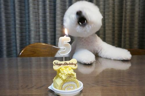 5歳ケーキ6