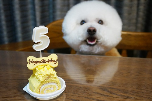 5歳ケーキ2