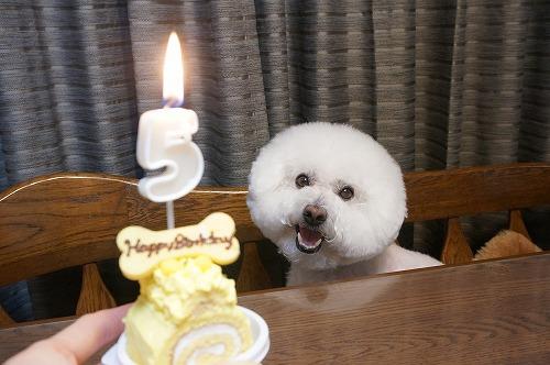5歳ケーキ1
