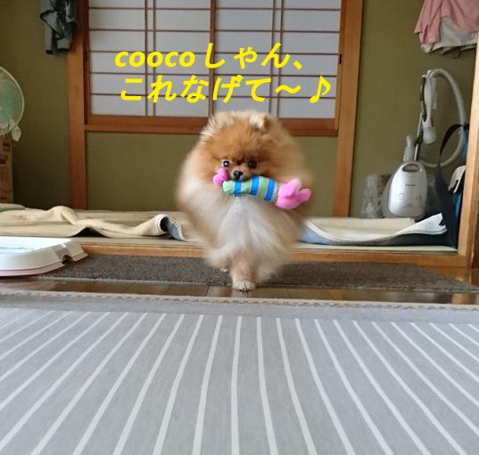 あしょぼ~