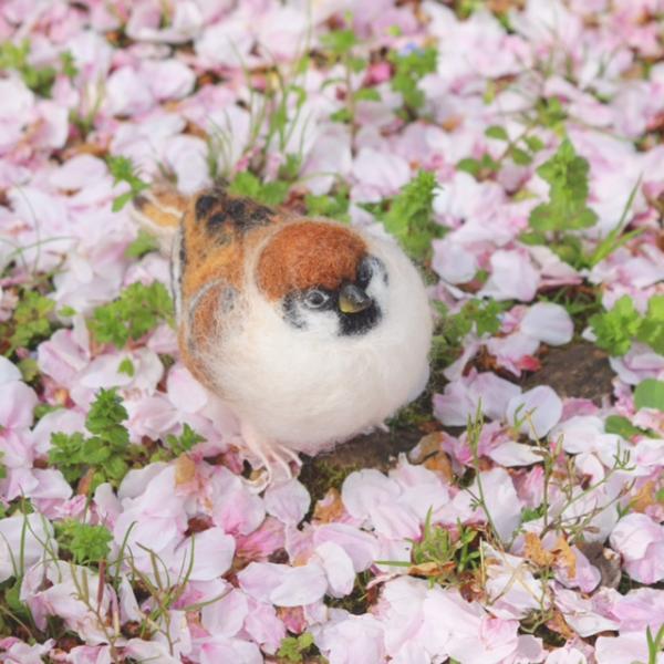 雀の桜の絨毯画像