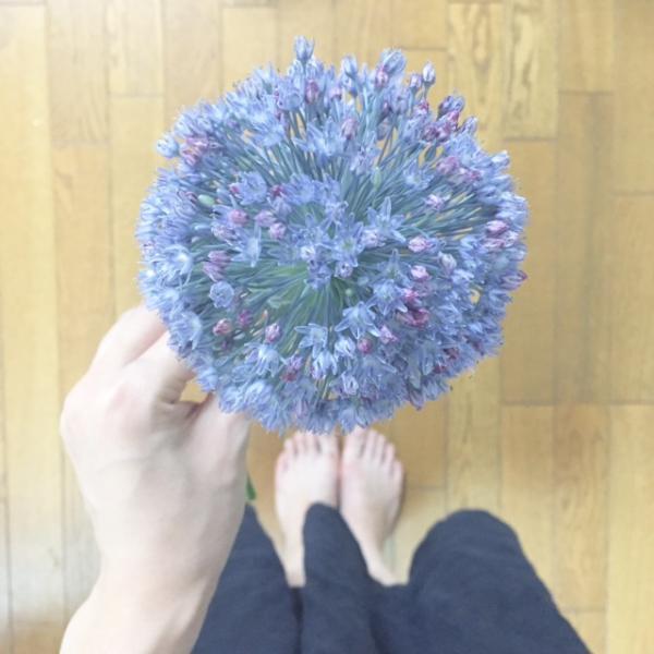 水色のお花_convert_20160710183137