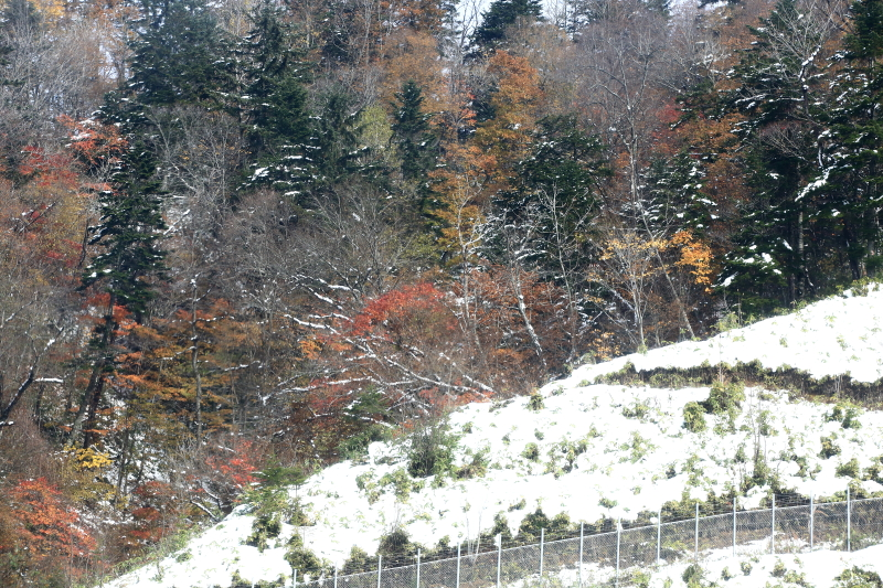 192 雪と紅葉0001