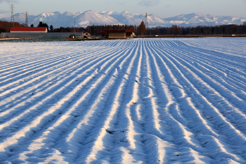 061 雪を被った畝0001