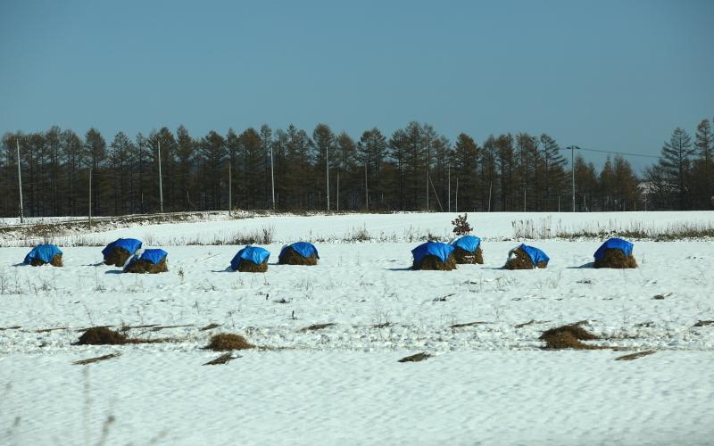 327 雪の中のニオ0001