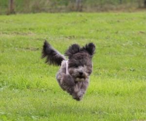 芝生で飛ぶ