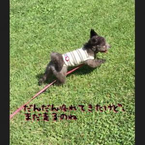 fc2blog_20160903121530f6e.jpg