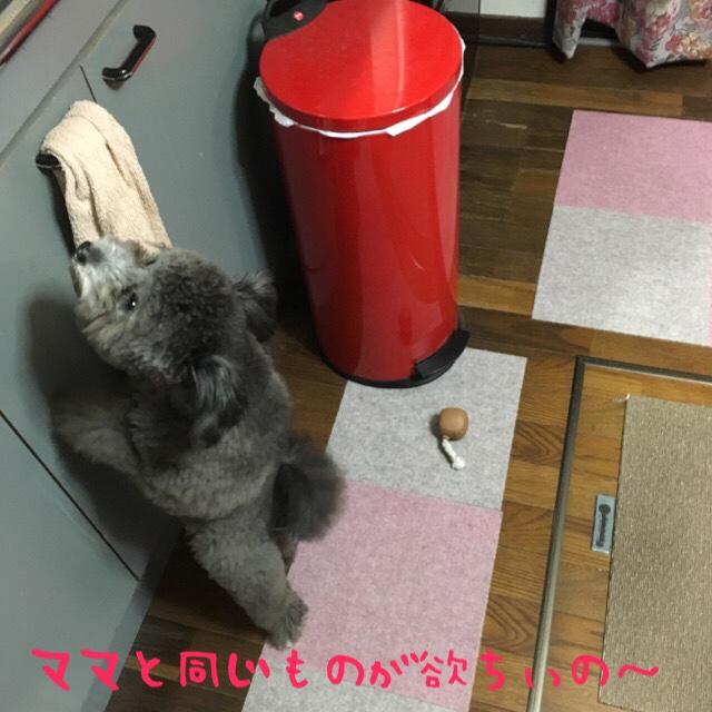 fc2blog_2016090312305731c.jpg