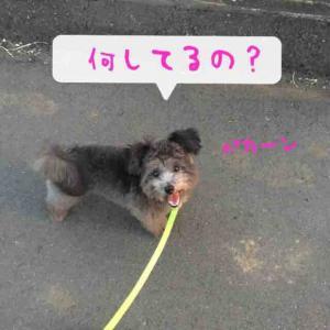 fc2blog_2016090622164275d.jpg