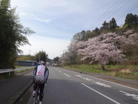 004桜が綺麗です