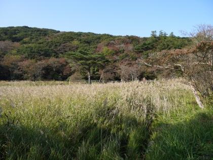 原生沼植物群落
