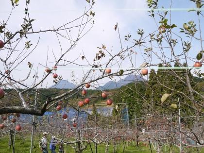 別府りんご園(3)