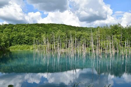 160629青い池 (2)