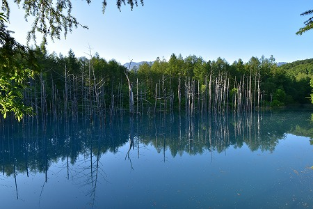 160629青い池 (5)