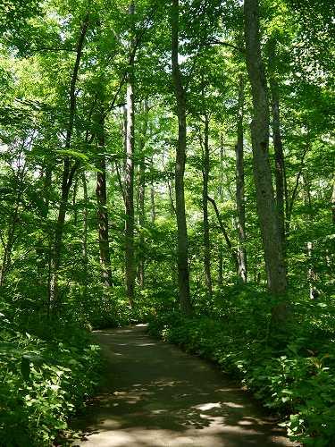 160629千年の森 (5)