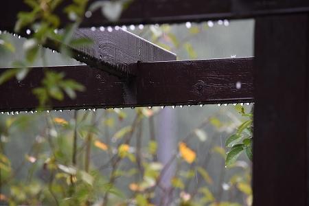 160829雨の庭 (4)