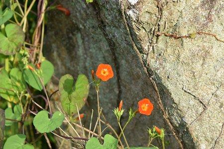 160921野の花 (1)