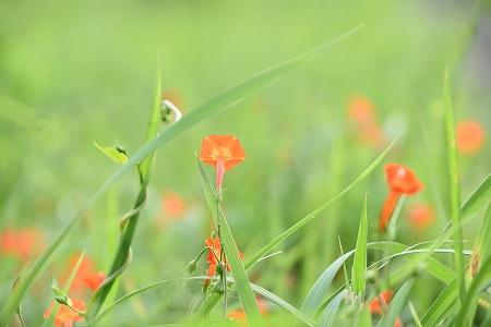 160921野の花 (4)