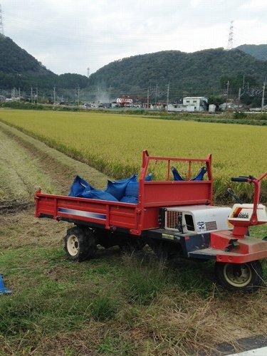 161012稲刈り (1)