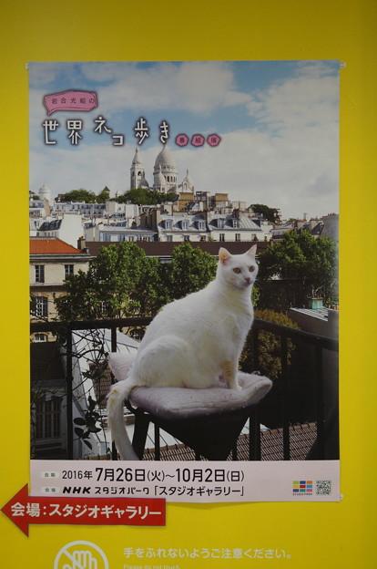 世界ネコ歩き番組展ポスター