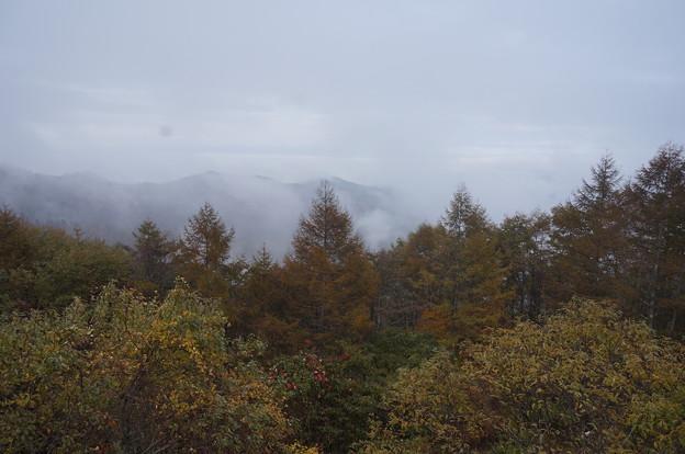 霧に包まれた山