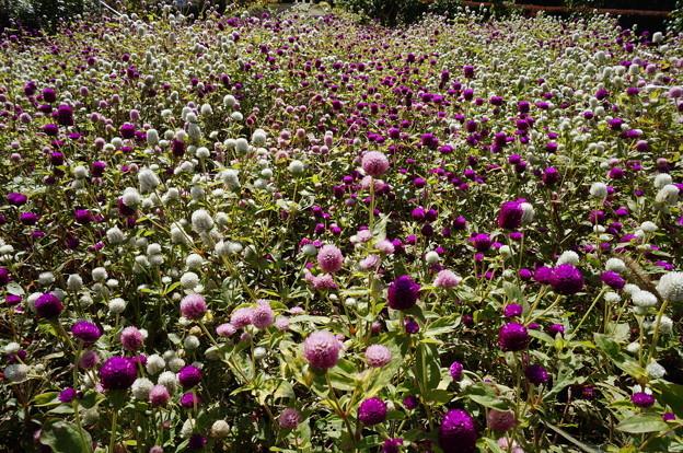 種採取専用花壇