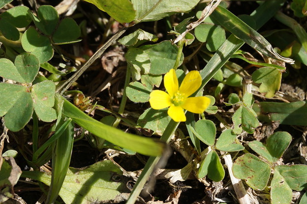 小さい花、見つけ!