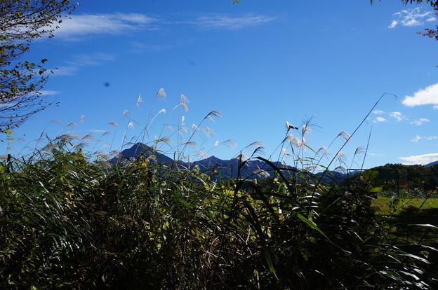 武甲山とススキ