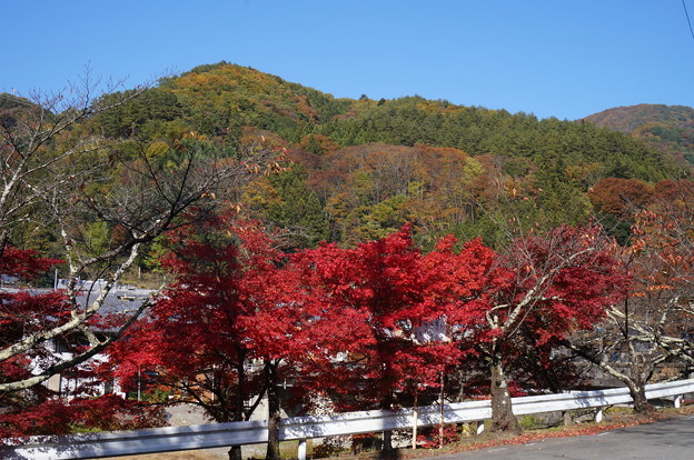 春は桜、秋は紅葉