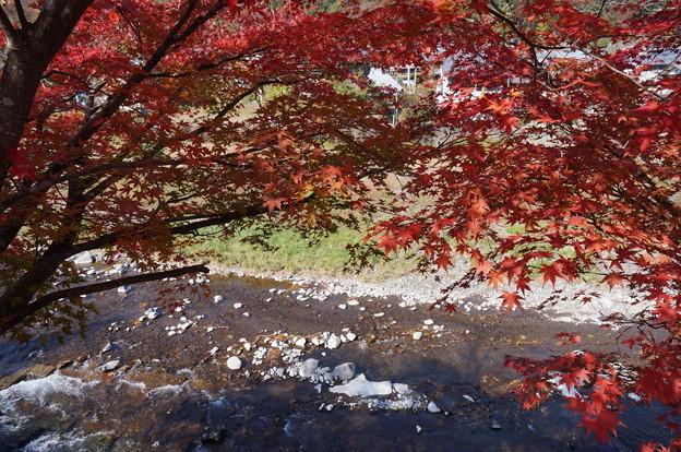 川沿いにある紅葉