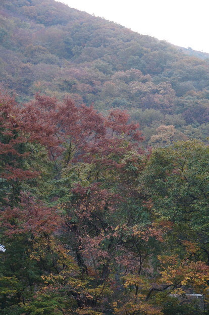 ベランダから見た紅葉