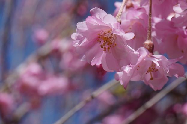 愛らしいピンク色