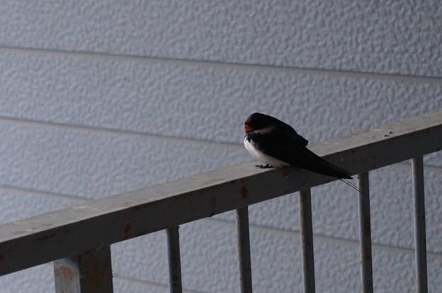お母さんを待つ小鳥