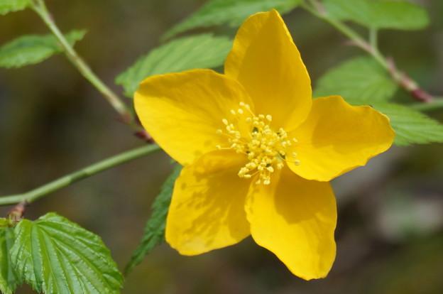 よく見かける黄色い花