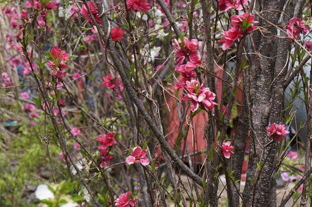 ビビットカラーの花