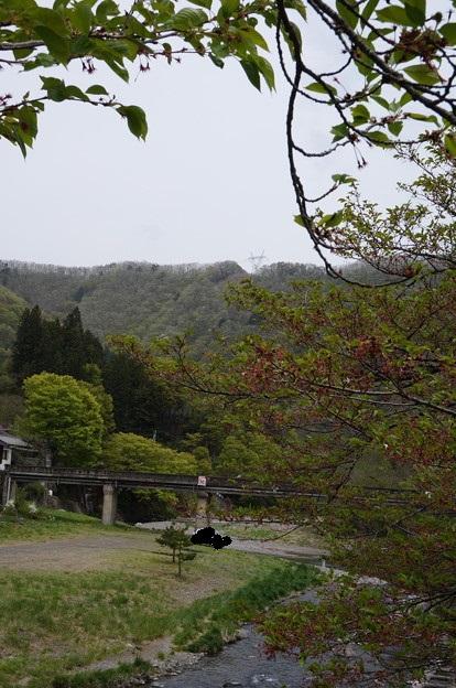 桜が終わった川沿い