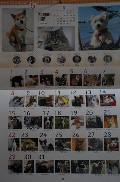 地域犬猫保護活動支援カレンダー2016