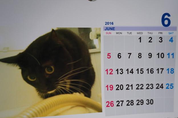 2016.6のカレンダー