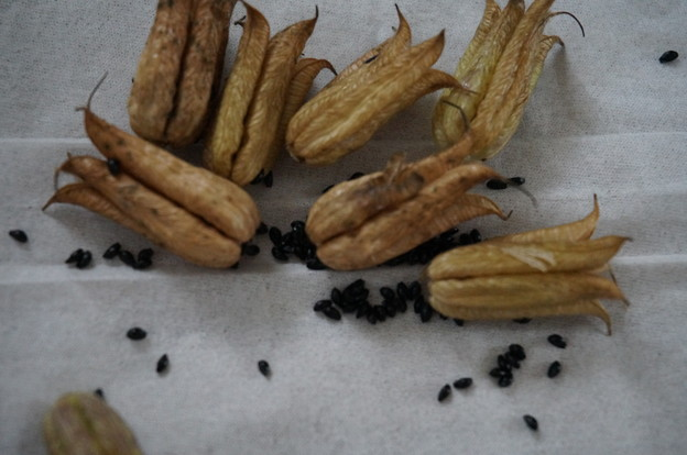 大収穫ナリ(`・ω・´)b