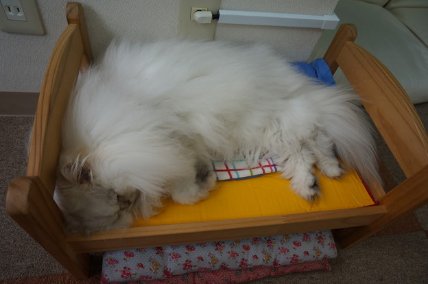 ベッドで寝てる(*´艸`*)