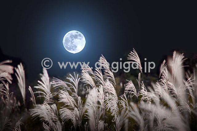 満月とススキ(タイトル『祈りのまなざし』より)