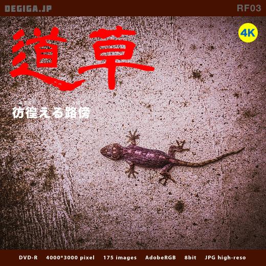 DVD『彷徨える路傍』パッケージ画像